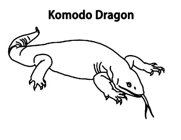 Komodo Dragon Komodo Dragon From Komodo Island Indonesia Coloring Pages Dragon Coloring Page Komodo Dragon Komodo