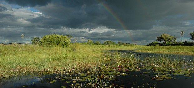 Dreaming of Okovango Delta