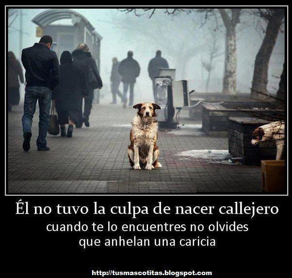 Perro callejero 1