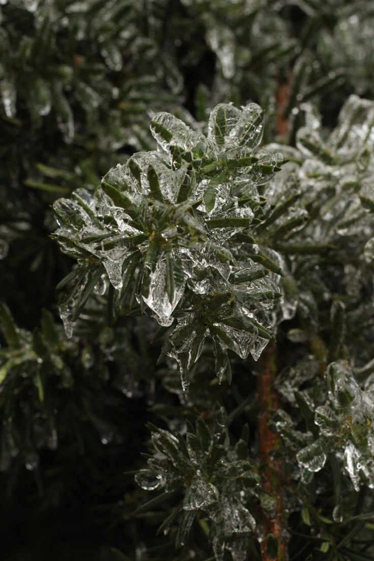 Ice Storm - Toronto, Ontario. December 23, 2013. Unedited photo by Andrea Couper.