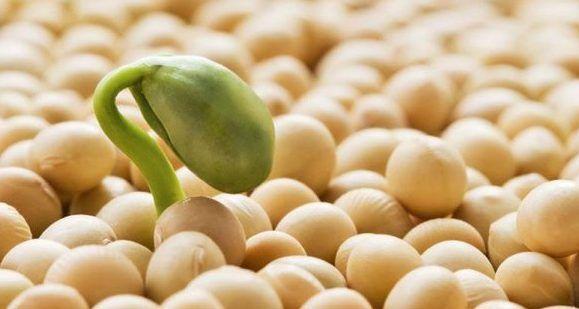 Les trouvailles de Lilona: Le grand débat autour du soja...