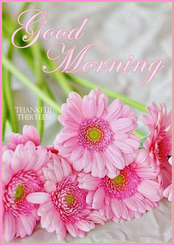 Good Morning Beautiful Pink Roses : Good morning gerbera pink pinterest
