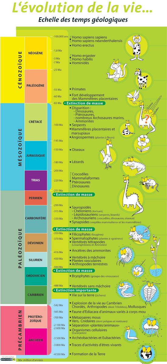 Evolution de la Vie, Echelle des Tps Géologiques Les Dinosaures