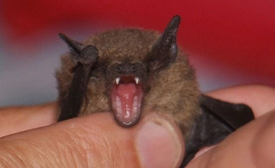 #Un murciélago mordió a un nene: el animal tenía rabia - 0223 Diario digital de Mar del Plata (Comunicado de prensa): 0223 Diario digital…