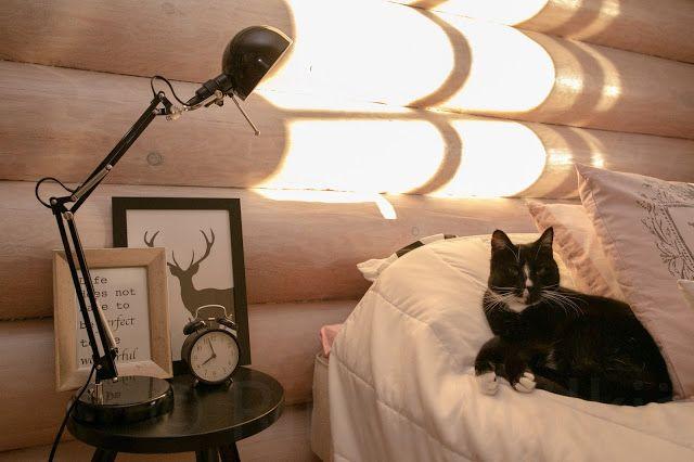 Minun omat kissanpäivät: Makkari