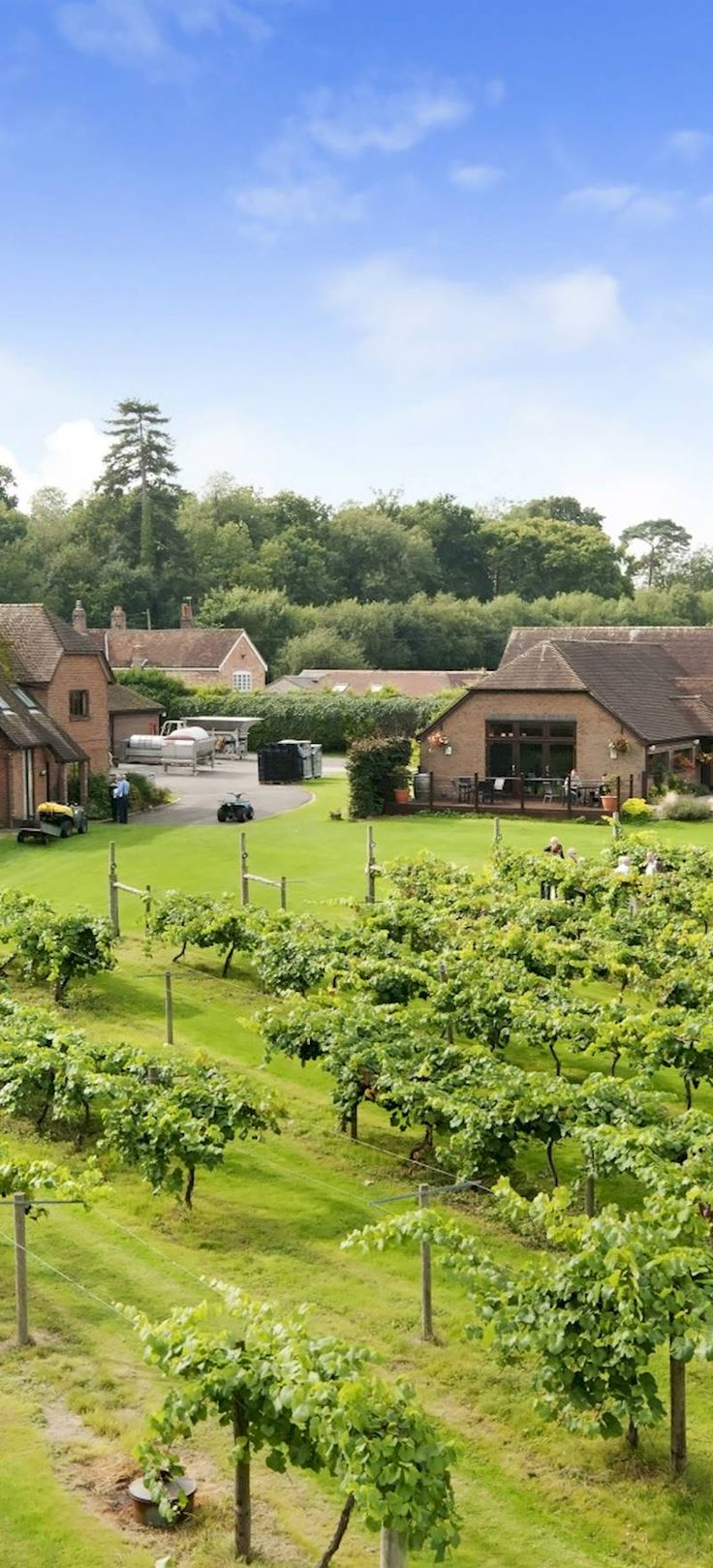 Vineyard Hampshire - Wine Tasting and Vineyard Restaurant | Three Choirs