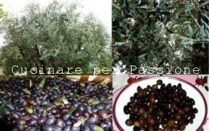 le olive raggiola in salamoia
