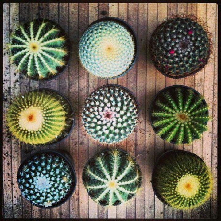 Cenital de cactus.