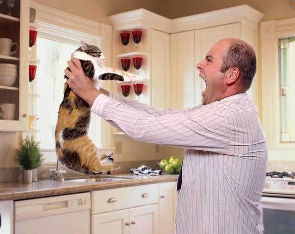 10 Common Things Cat Owners Do Which Can Literally Break a Cat's Spirit and Its Heart - Happy Cats