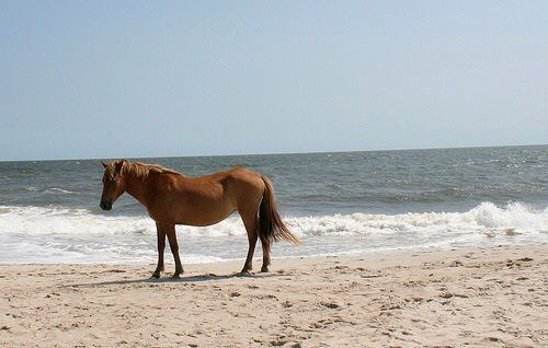 Assateague Island, MD...loved this beach soooo much when we visited!!