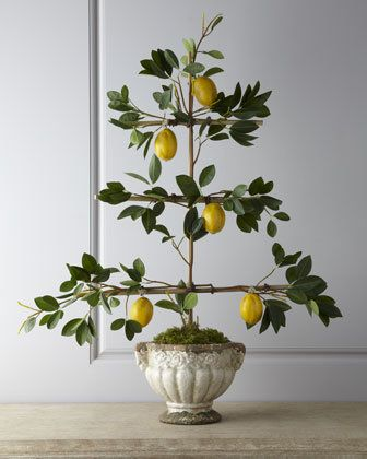 Florence de Dampierre Lemon Espalier Faux Arrangement ~~ this might be the only way I will ever have an espaliered tree.