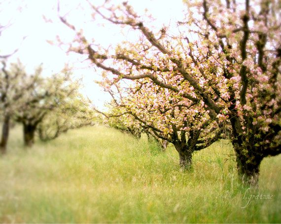 Landscape of an orchard.