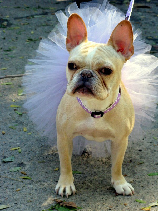 Pin for Later: 9 Unique Halloween Costume Ideas For You and Your Dog Ballerinas
