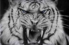 White Tiger Wallpapers Mobile for HD Wallpaper Desktop x px 4.00 KB