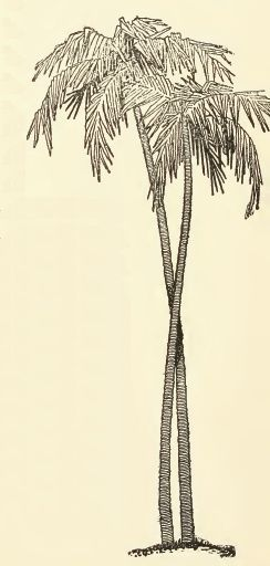 Palm tree drawing.