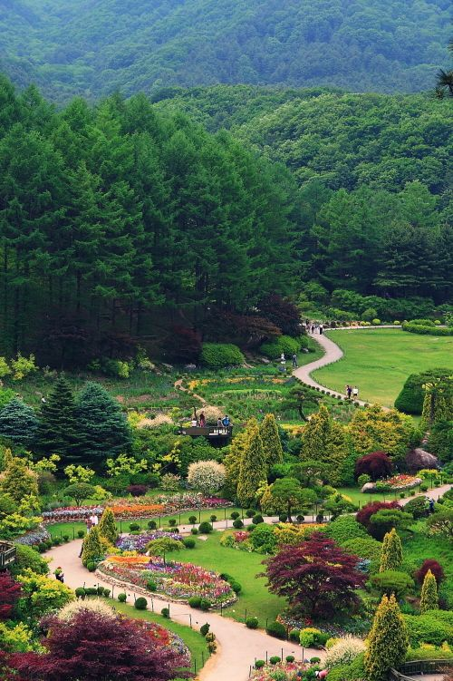 Spring #Festival of The Garden of Morning Calm The Garden of Morning Calm is one of #Korea's major botanical gardens, attracting about 700,000 tourists from home and abroad annually.