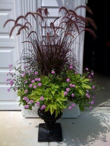 Can stand up to full sun, hot and humid conditions.  Fountain grass for the center, trailing verbena and potato vine.  Purple lantana would work too.