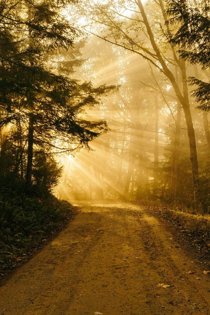 Free stock photo of light, road, sunshine, forest