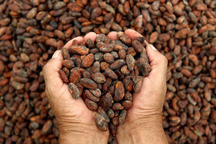 MLS - Central America Property Blog: Buenas noticias para el mercado del cacao #mls-global