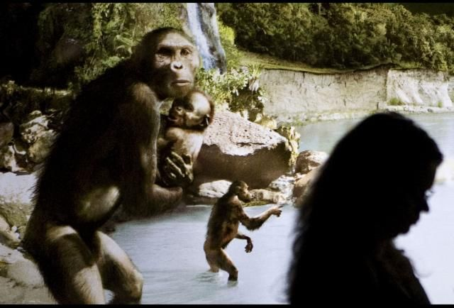 A belated Happy Birthday to Lucy the Australopithecus! She is 41 today (November 24) - give or take 3.2 million years.