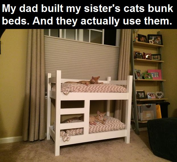 Bunk Beds For Cats cute animals cat cats adorable animal kittens pets kitten funny animals
