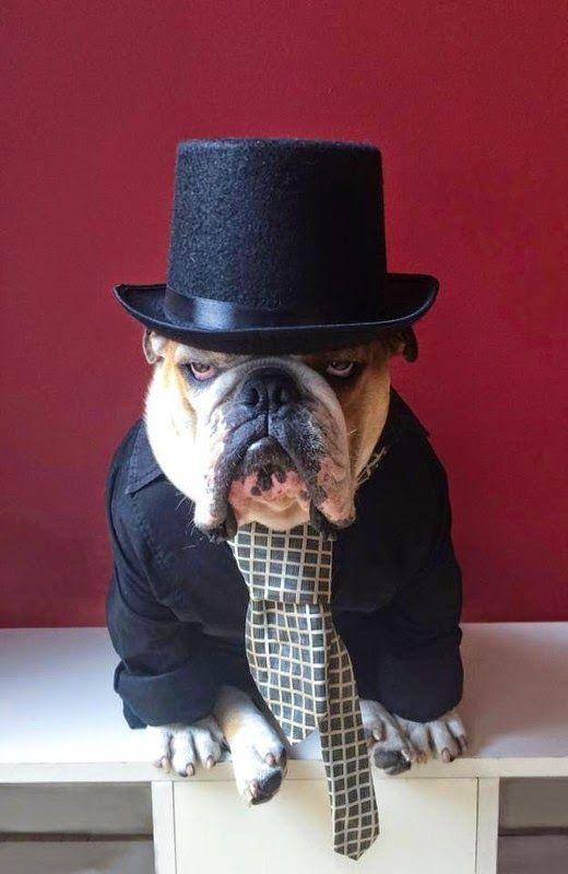 Top 5 Most Stylish Dog Breeds