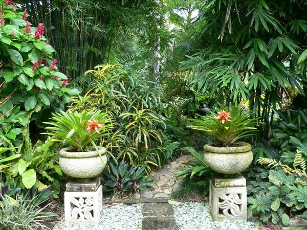 A Beautiful Tropical Garden Just What The Doctor Ordered I Grew Up In The Tropics And Find