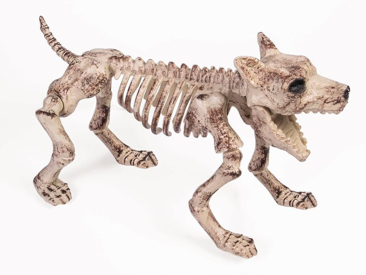 Products for Dog Lovers | Scare your guests and trick-or-treaters and instantly transform your home or lawn into a graveyard with this creepy skeleton dog décor!
