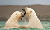 Adventure Canada | Arctic, Antarctic, East Coast cruises & Canadian wilderness trips