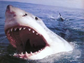 Cresce nel mondo il numero degli attacchi di squali: i consigli ai bagnanti - See more at: http://www.resapubblica.it/it/ambiente/2474-cresce-nel-mondo-il-numero-degli-attacchi-di-squali-i-consigli-degli-esperti#sthash.eqOjiiel.dpuf