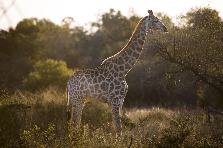 Exclusive Safari Engagements in South Africa http://safariweddings.co.za/engagement-elopement/
