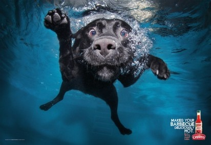 """""""Makes your barbecue deliciously hot"""" Cepêra Extra strong pepper sauce Agency: Young & Rubicam Sao Paulo (Brazil): Animals, Pets, Funny, Underwater Dogs, Seth Casteel, Photography, Underwaterdogs"""