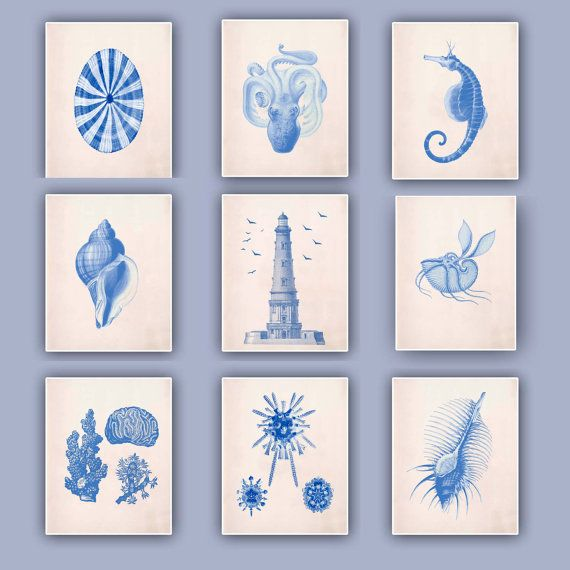 Nautical blue Prints, blue seashells, Sea horse, Lighthouse, Argonauta, Venus comb, beach cottage decor, coastal living, Set  9 Prints on Etsy, $90.00