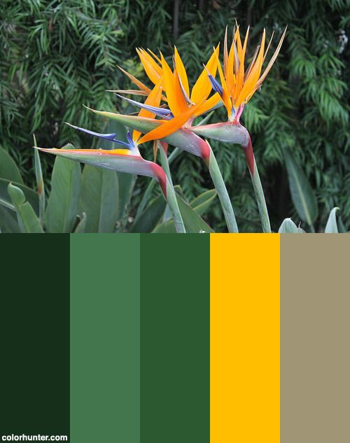 Tropical+Bird+Of+Paradise+Flower+Color+Scheme