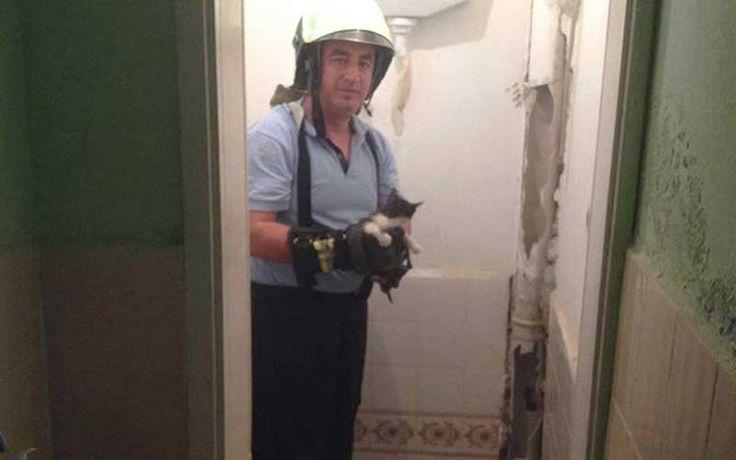 Matkaplı kedi kurtarma operasyonu.. Detaylar ajanimo.com'da.. #ajanimo #ajanbrian #animal #hayvan #cat #kedi