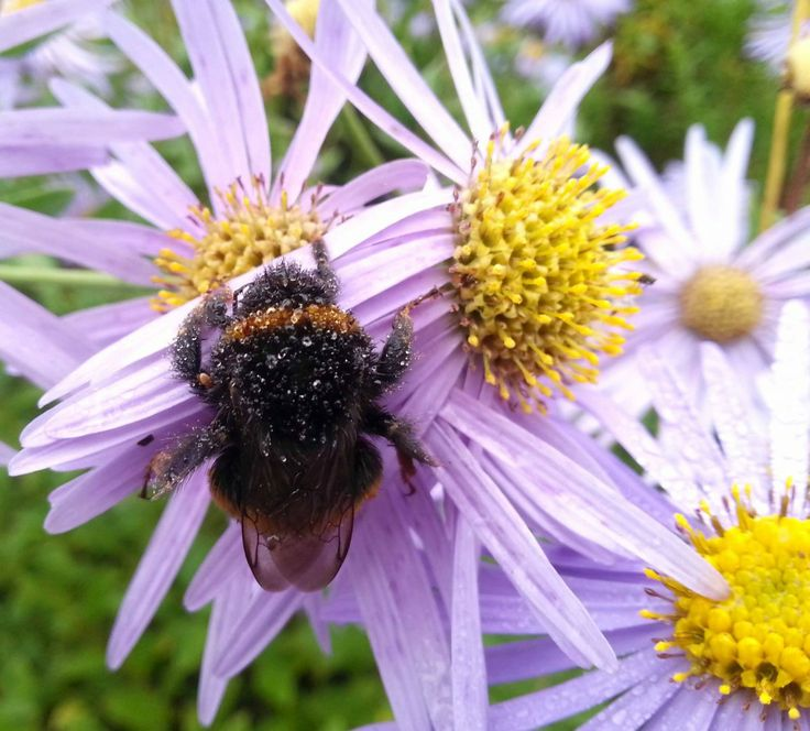 Five things we can do right now to help the bees that will make a difference  1. Don't contaminate the flowersthat are growing. Stop sprayi...