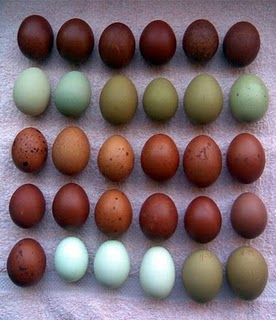 Love the colors. Breeds? The greens & blues would be Aracaunas or Americaunas. The dark browns, maybe Marans or Welsummers.  And, some brown eggs are almost a dusty rose. All so pretty together. Who needs dye?!