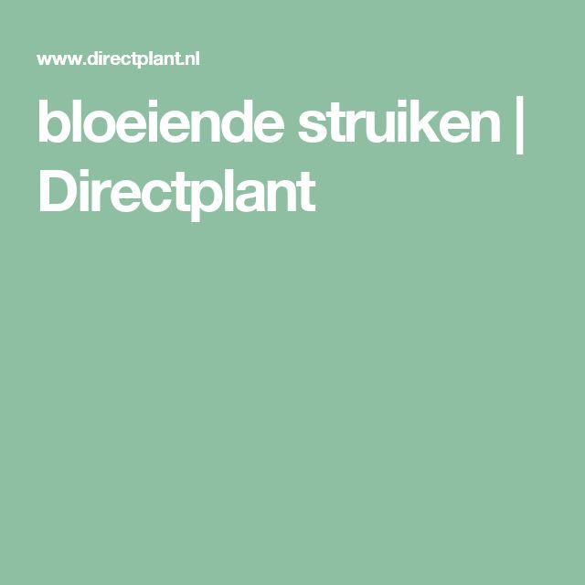 bloeiende struiken | Directplant