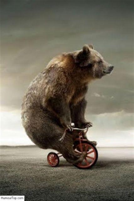 Image drôle d'un énorme ours qui est sur un tricycle d'enfant
