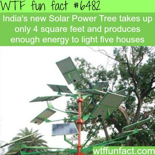 Solar Power Tree - WTF fun facts | Follow @gwylio0148 or visit http://gwyl.io/ for more diy/kids/pets videos