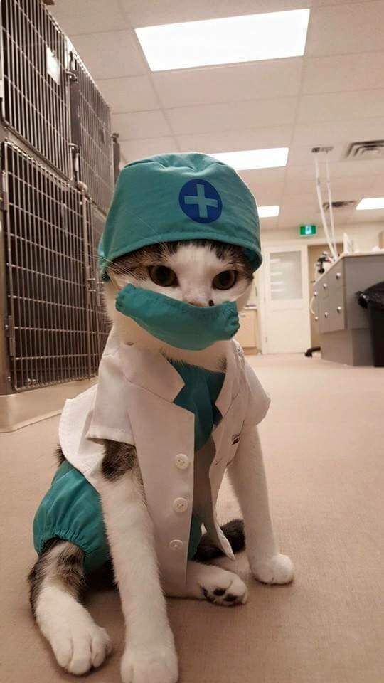 Not my kitty. :( Saw it on Facebook and thought Imgur would love a Doctor Kitty!!