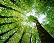 #Energie : Le Développement #Durable - Enjeux - Contexte mondial - Commençons déjà par adopter le réflexe des gestes #eco #responsable - Découvrez la définition sur le #blog du comparateur malin #CompareDabord : http://www.comparedabord.com/blog/travaux-et-energie/article/le-developpement-durable