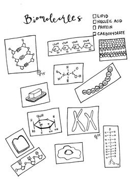 25+ best ideas about Nucleic acid on Pinterest | Cell biology, Dna ...