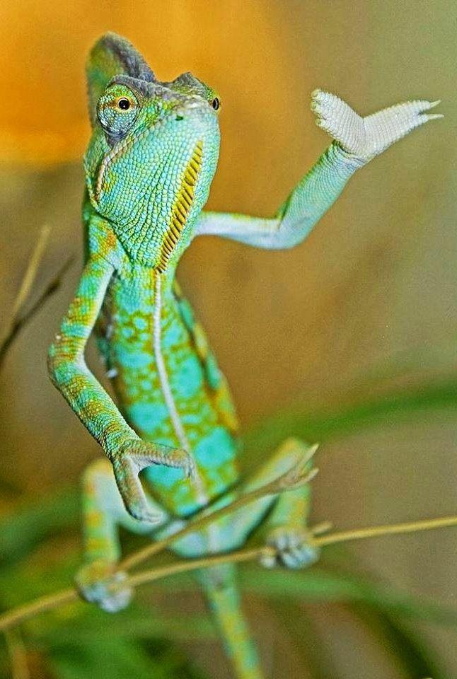 name cute chameleon - photo #6