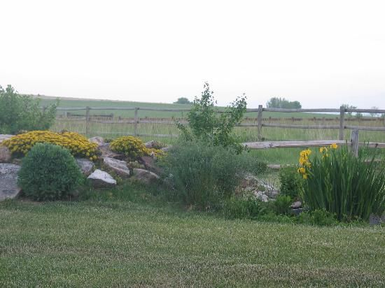 Ponds pros and cons homesteading pinterest gardens for Fish farming pros and cons
