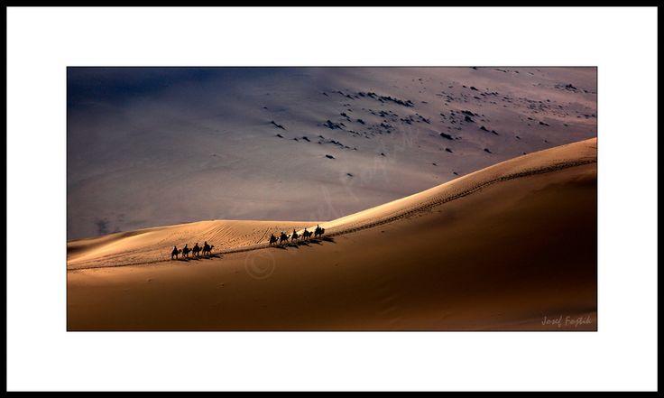 Fine art print - Camel caravan in the desert near Dunhuang, Gansu, China. Photo: Josef Fojtik - www.joseffojtik.com