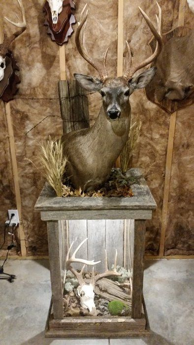 Barnwood Pedestal For Whitetail Mount