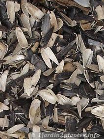 paillage avec des coques de tournesol Ce paillage est très léger, se conserve 2 à 3 ans. Sa couleur noir et blanc met en valeur les plantes dans un massif.