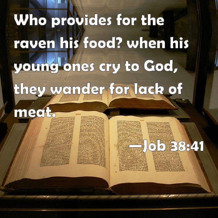 Job 38:41 Who provides for the raven his food? when his young ones cry out to God, they wander for lack of meat. --- animals pray. Animals have personal relationships with God. Animals are more intelligent than you thought. Read the book of Numbers about the donkey, at least some animals are sentient. Animals know God. What if animal instincts such as migration routes are simply animals praying and receiving an answer to prayer of where they should go?