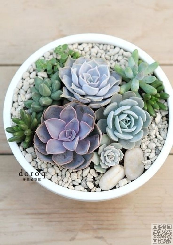 16. #Shades of Blue - Gorgeous! Grow #These Stunning Succulents Now ... → #Gardening #Succulents